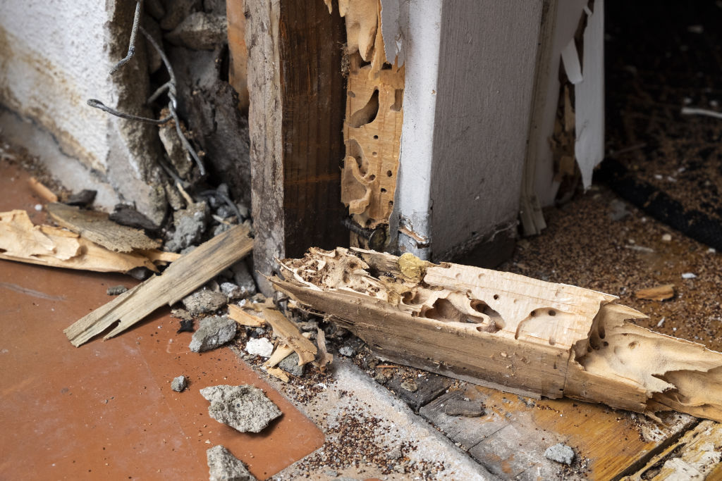 Timber Pest Inspections